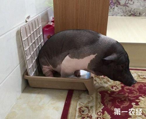 你会养一个特别臭的宠物天天闻么,他自己会找地方而且不在家不在睡觉