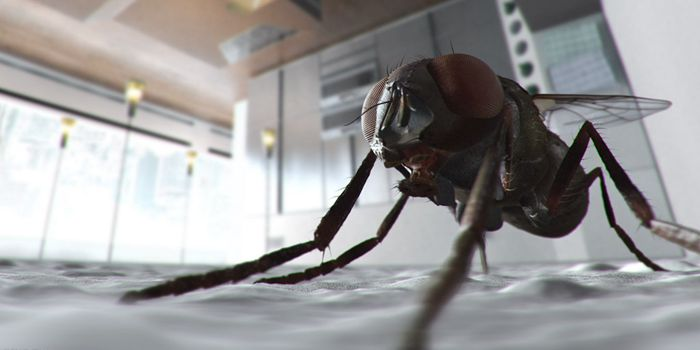 苍蝇的寿命是多久?