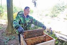 种地养蜂收瓜,各行各业农民忙不停