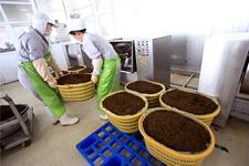 浙江温州洞头县:休闲海岛发展优势羊栖菜产业
