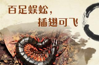【养蜈蚣专题】蜈蚣养殖技术与前景分享