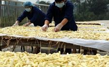 安徽铜陵白姜种植试点有机肥料补贴50万元