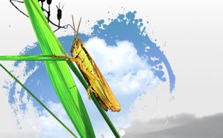 【养蚂蚱专题】蚂蚱养殖技术和前景分析