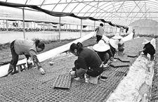 <b>福建建瓯设施农业创高效益 实行秧盘育种</b>