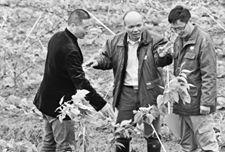 浙江美之奥种业公司组织农技人员下乡服务