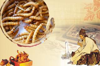 黄粉虫养殖技术与前景分析 黄粉虫的妙用