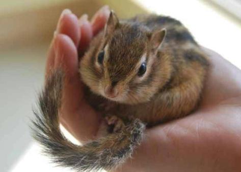 松鼠怎么养?