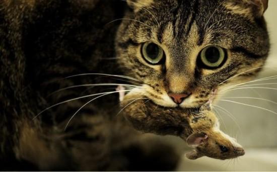 猫吃什么最好?