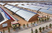 陕西定边县:沙漠里的现代农业示范园