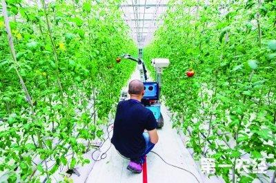 雨发生态园果蔬采摘机器人-浙江浦口 新型无土栽培农业 新图景