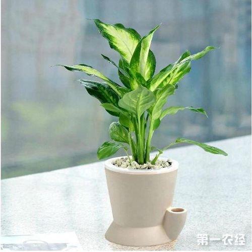 【疑难解析】室内家居风水植物怎么选择?