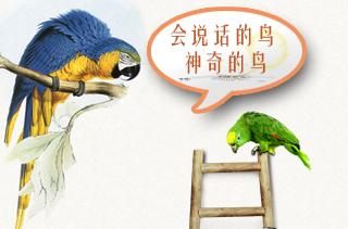 鹦鹉养殖技术与前景分析 鹦鹉养殖视频分享