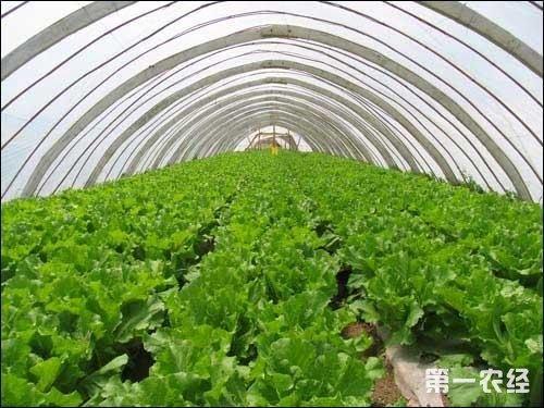 蔬菜栽培步骤图片