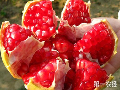 陕西特产水果:临潼石榴