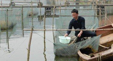 养黄鳝赚钱吗?