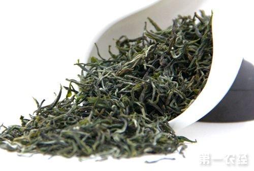 安徽休宁特产名茶:新安源银毫