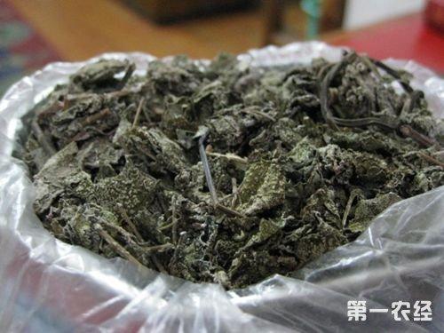 广东粤北特产茶:溪黄茶