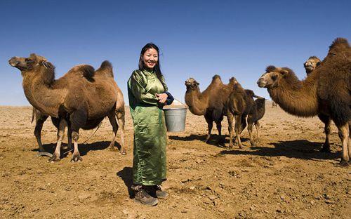 养骆驼赚钱吗?