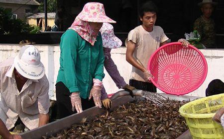 泥鳅养殖利润如何?