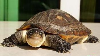 深锁宅院 石龟不怕人不识