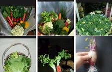这样的蔬菜花束组合,你喜欢吗?