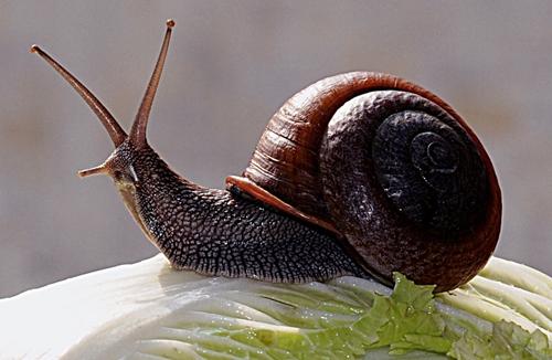"""住进""""豪宅""""的蜗牛换来的财富"""