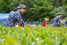"""湖北三峡""""茶艺节""""签约逾5亿元"""