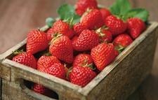"""<b>""""草莓致癌""""都辟谣了为何还滞销?</b>"""