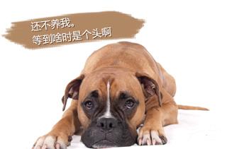 【养肉狗专题】肉狗养殖|怎么养狗赚钱