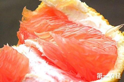 四川内江特产水果:资中塔罗科血橙