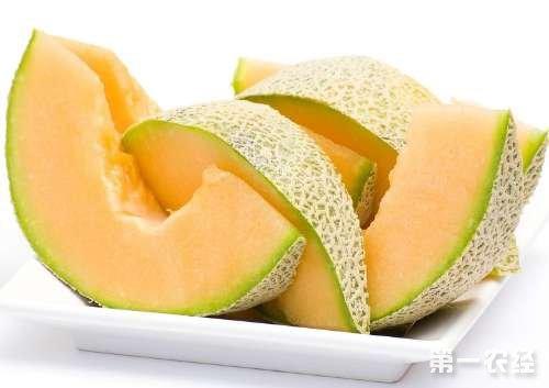 海南特产水果:西州蜜瓜
