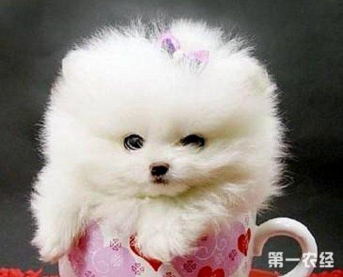 动物漂亮的杯子最最最漂亮的图片