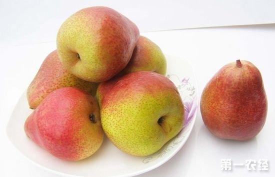 吉林延边特产水果:延边苹果梨
