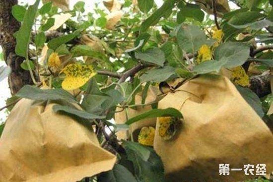 苹果褐斑病如何防治?