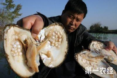 河蚌清理步骤图解