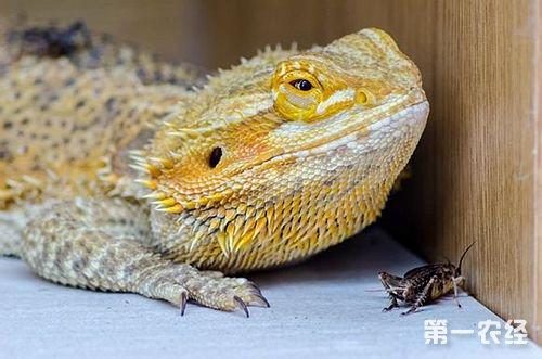 蜥蜴是不是脊椎动物