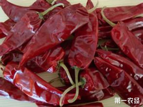 内蒙古著名特产:托县红辣椒