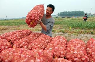 【大蒜专题】大蒜栽培种植管理技术|病虫害防治