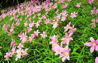 【兰花专题】兰花种植技术|兰花病虫害