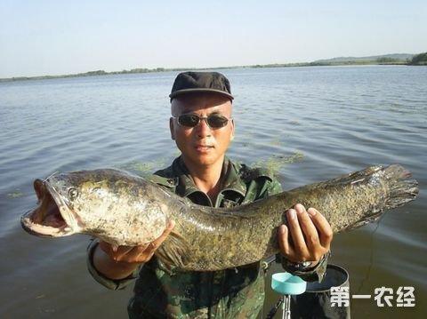 国家水生动物养殖