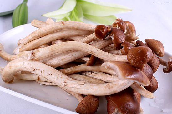 江西抚州两种颜色的茶树菇
