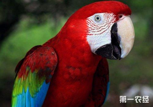 动物 鸟 鹦鹉 500