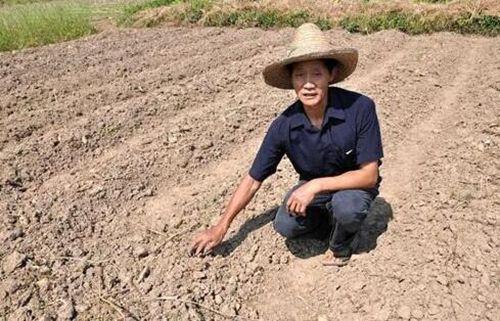 辽宁农田受旱面积达160余万亩 大连饮水困难者达9.26万人图片 53272 500x321