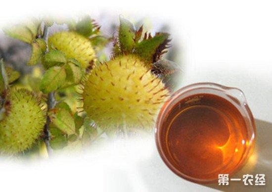 贵州毕节特产:刺梨酒
