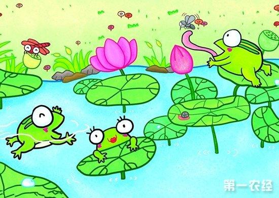 """蛙声一片商机乍现:湖北公安县""""青蛙王子""""创富记"""