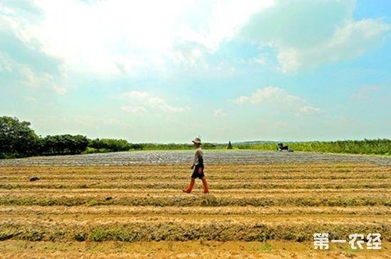 """""""在农村综合改革中,制度建设和创新是工作成败的关键。""""石大立建议,广州市白云区在出台制度时,需要综合考虑经济、社会和政治效益,形成支撑农业改革的政策体系。如上海松江区推进家庭农场的过程,细化了土地流转和从业人员的准入、退出机制等,给基层明确的执行指引,赢得多方支持。广州市白云区农村改革的制度设计,也可以突出区域发展的特点,针对划分的三大改革区域的不同发展实际,明确各区域的改革发展重点,形成政策支持体系。"""