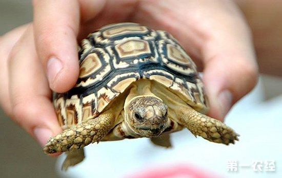 宠物龟的种类有哪些?