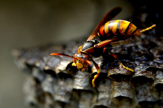 昆虫菜单 马蜂上餐桌