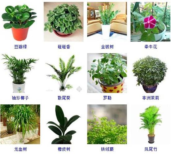 96种室内植物图片及名称,室内植物品种大全(图片)