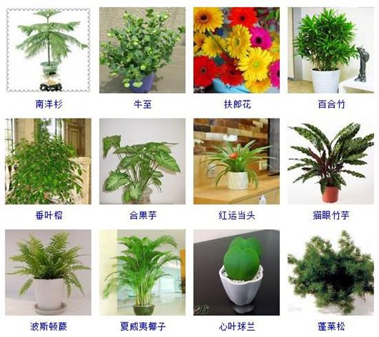 96種室內植物圖片及名稱,室內植物品種大全(圖片)